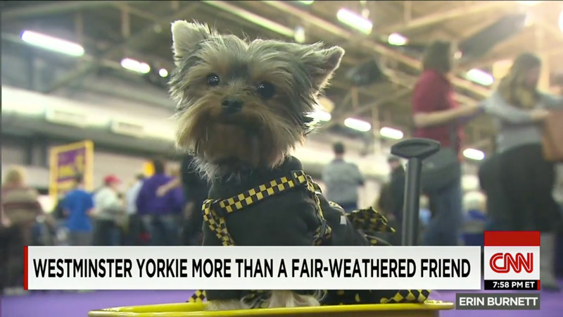 Schmitty the Weather Dog - More than a Fair-weathered Friend - CNN, Jeanie Moos
