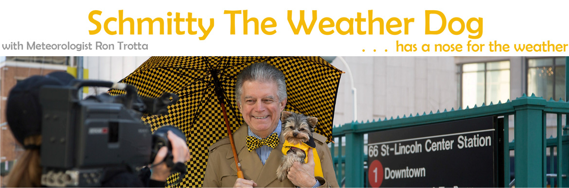 Schmitty the Weather Dog