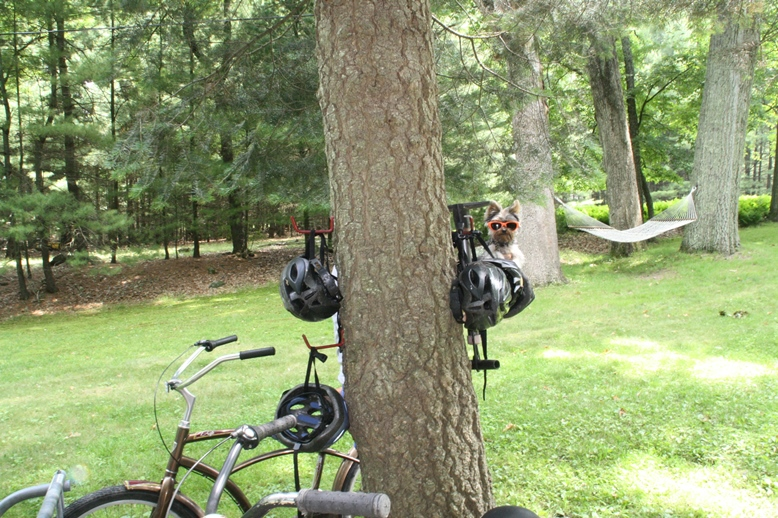 Helmets grow on trees at the Inn At Lake Joseph? Who knew.