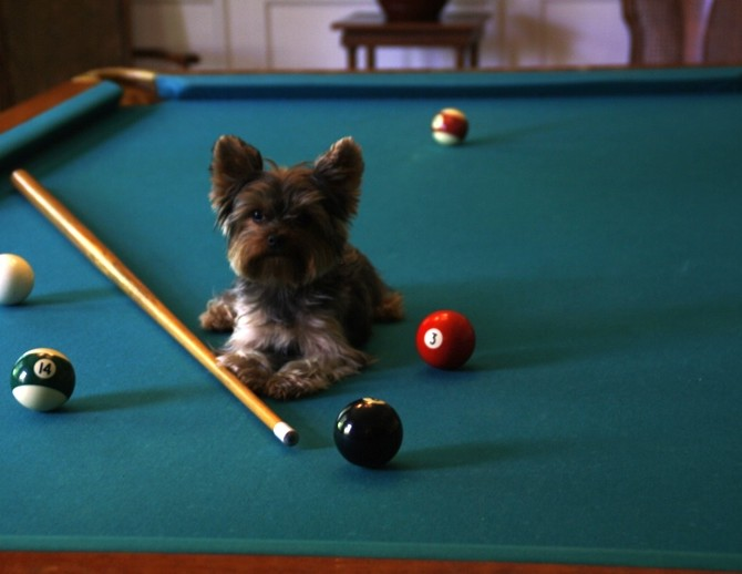 Schmitty on the pool table resized