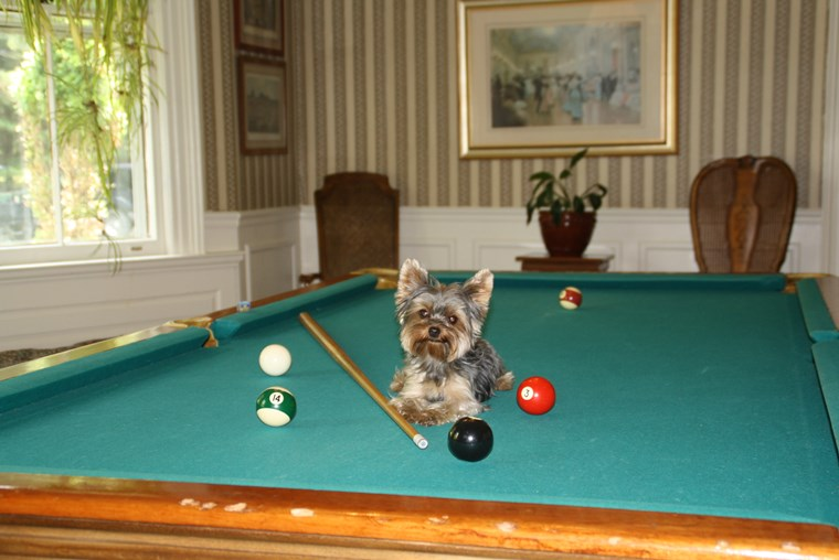 OK, if a pool is for swimming, then why is this called a pool table?