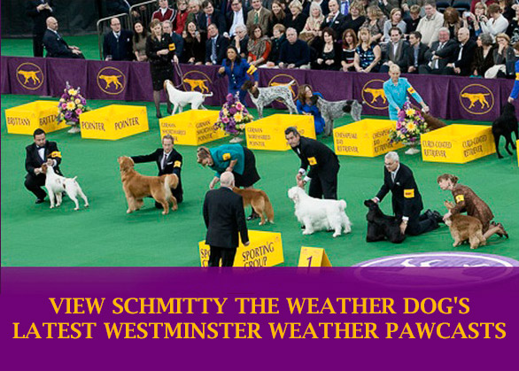 Schmitty The Weather Dog's
