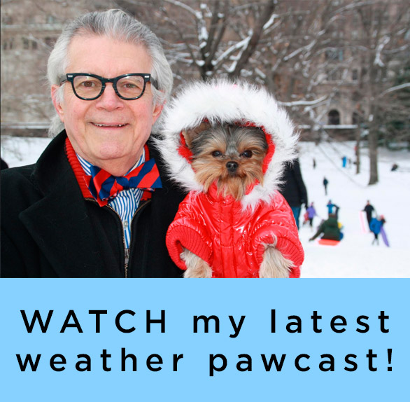 Schmitty the Weather Dog on YouTube