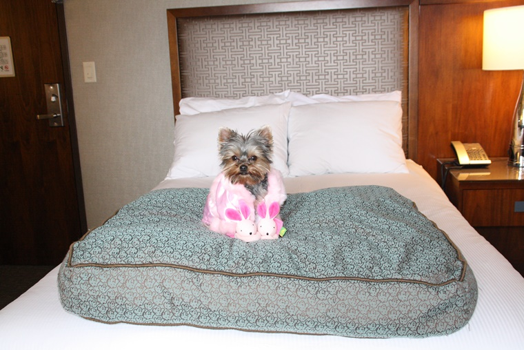 Snug as a bug in my room with my robe and bunny slippers. The doggie bed?  Courtesy of the fab Hilton Chicago!