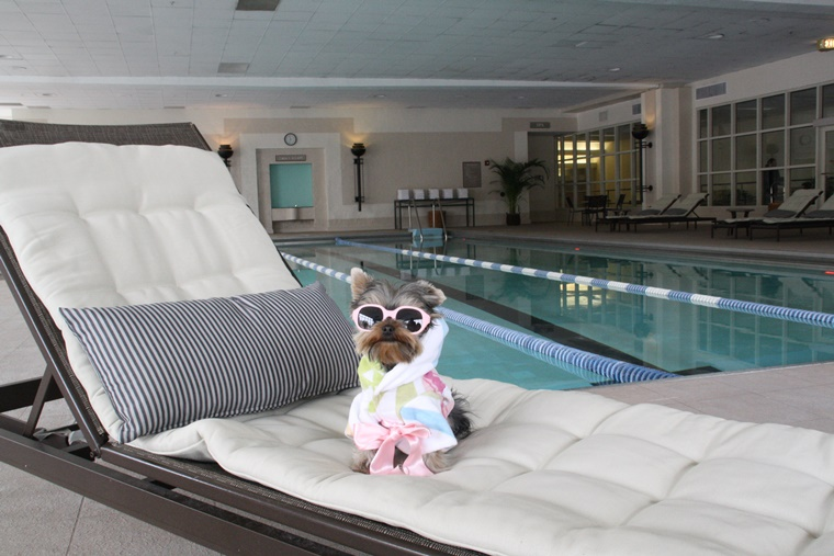 After a ruff day, one can chill by the Hilton Chicago roof top pool.  Nice.