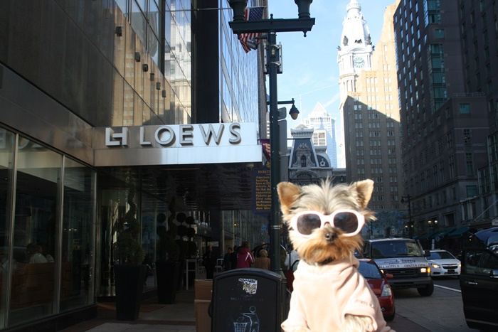 Right in the heart of so many fab sights & sniffs, Loews Philadelphia Hotel rocks/barks!